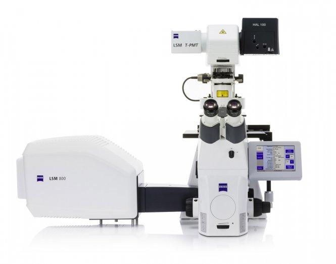 Laser Scanning Mikroskop LSM 800